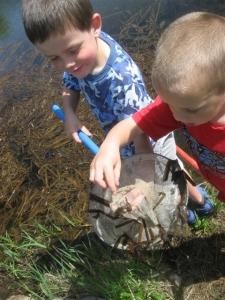 Boys in frog pond